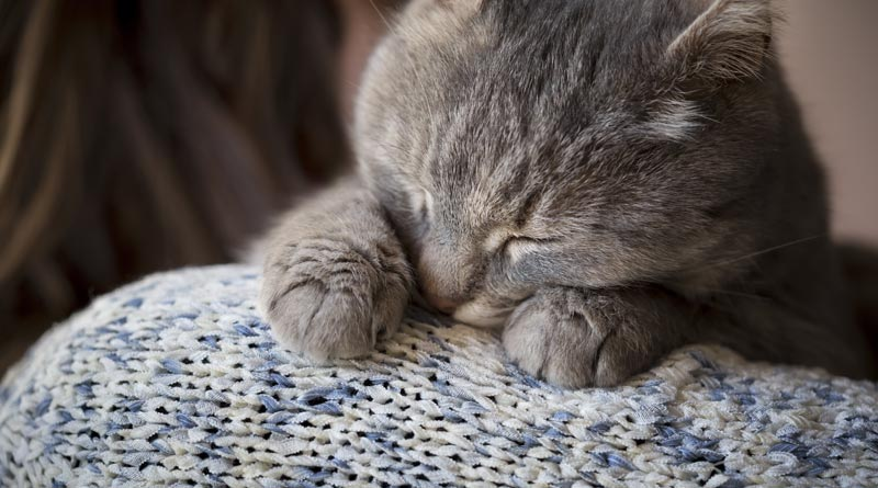Zakaj mačke predejo?