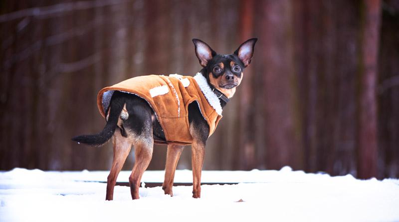 5 razlogov za pasja oblačila